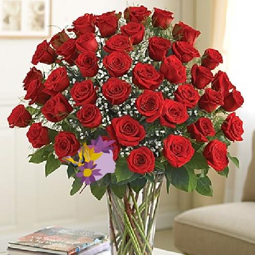 Conosciuto Rose rosse | eFlora Shop GP41